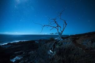 そびえ立つ木々と星空の写真素材 [FYI01209721]
