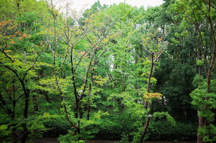 雨上がりの緑の写真素材 [FYI01209769]