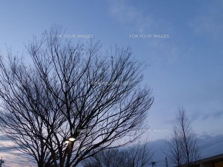 冬空と木の写真素材 [FYI01209774]