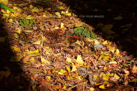 ドアを開けた光と影 落葉の写真素材 [FYI01209817]