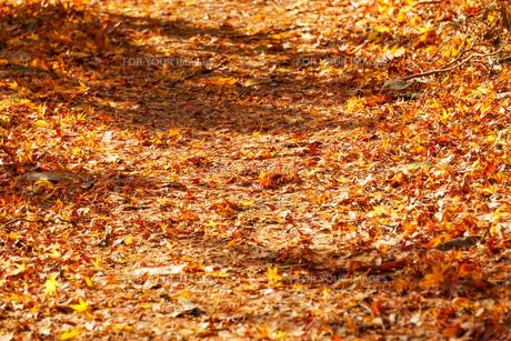 落葉が積もる秋の遊歩道の写真素材 [FYI01209819]