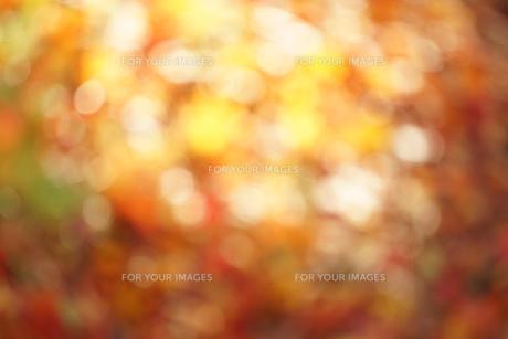 秋色の玉ボケの写真素材 [FYI01209824]