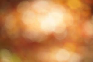 秋色の玉ボケの写真素材 [FYI01209825]