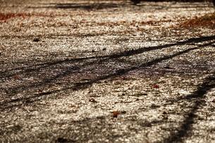 濡れた路面と樹木の影 秋冬素材の写真素材 [FYI01209830]