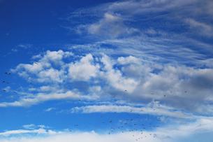 秋の空を飛ぶ鳩の群れの写真素材 [FYI01209852]