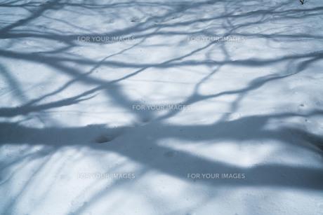 雪と影の写真素材 [FYI01209880]