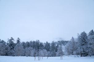 曇天の雪景色の写真素材 [FYI01209885]