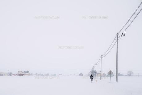 犬散歩と冬景色の写真素材 [FYI01209900]