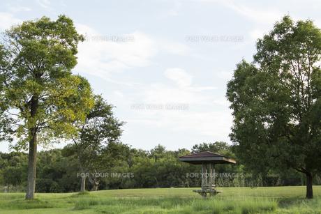公園の写真素材 [FYI01209967]