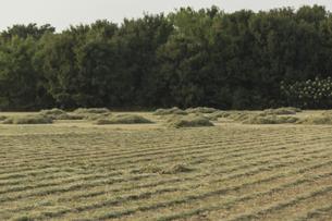 草刈り後の牧草、草原の写真素材 [FYI01209972]