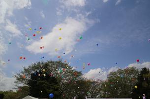 空に飛んでいく風船の写真素材 [FYI01210193]
