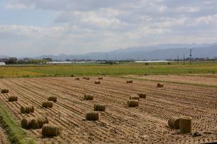 米栽培の記録 ・ 日本人の主食コメ 田植え 生育 稲刈りの記録。の写真素材 [FYI01210352]