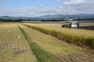 米栽培の記録 ・ 日本人の主食コメ 田植え 生育 稲刈りの記録。の写真素材 [FYI01210353]