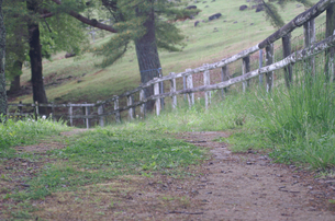 木の柵とダートロードの写真素材 [FYI01210545]