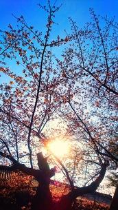 木の写真素材 [FYI01210567]