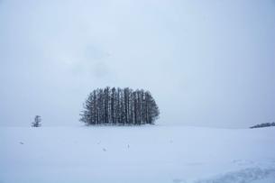 雪の丘の上のカラマツ林 美瑛町の写真素材 [FYI01210738]