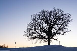 冬の夕暮れの丘に立つ冬木立 美瑛町の写真素材 [FYI01210757]