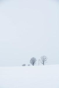 雪の丘の冬木立 美瑛町の写真素材 [FYI01210773]