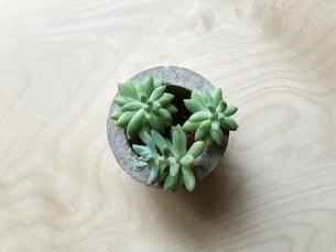 多肉植物、一つの写真素材 [FYI01211064]