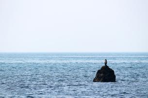 岩礁に佇む海鳥の写真素材 [FYI01211128]