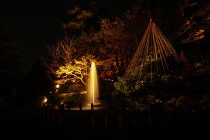 日本庭園のライトアップ 日本三大庭園 兼六園 石川県金沢市の写真素材 [FYI01211144]