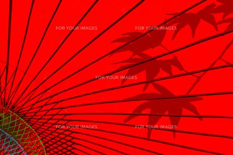 赤い番傘と楓のシルエットの写真素材 [FYI01211159]