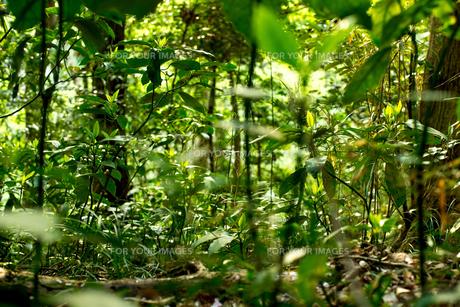 森、草、アップの写真素材 [FYI01211197]