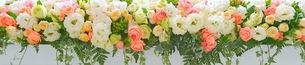 花の写真素材 [FYI01211417]