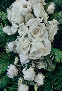 花の写真素材 [FYI01211419]