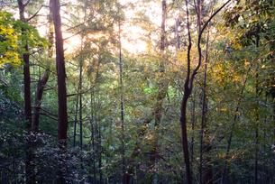 森の日暮れの写真素材 [FYI01211420]