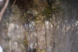 苔と氷の写真素材 [FYI01211425]