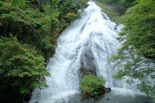 滝の写真素材 [FYI01211427]