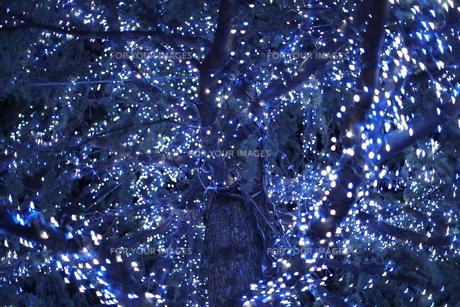 クリスマスツリーの写真素材 [FYI01211441]
