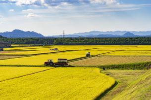 風景 秋 田んぼ 収穫 米 自然 青空 空 雲 水田 収穫期の写真素材 [FYI01211533]