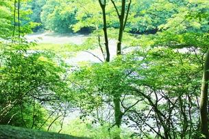 群馬県の吹き割りの滝 夏の風景の写真素材 [FYI01211711]