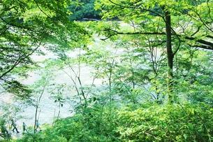 群馬県の吹き割りの滝 夏の風景の写真素材 [FYI01211713]