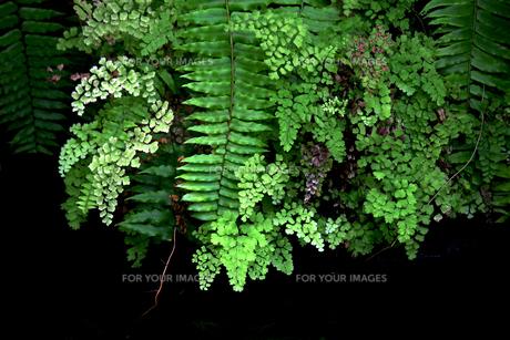 緑が鮮やかな熱帯の植物の写真素材 [FYI01211804]