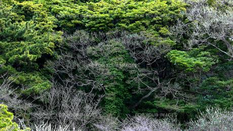 緑の生い茂る崖の風景の写真素材 [FYI01211896]