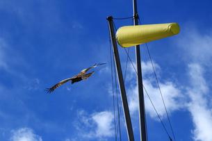 強い風の吹く空を飛ぶ鳥の写真素材 [FYI01211900]