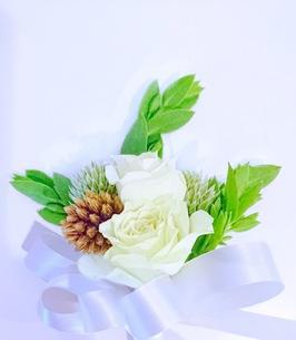 花の写真素材 [FYI01211924]