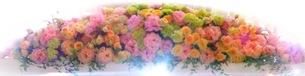 花の写真素材 [FYI01211925]