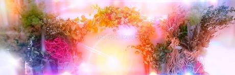 光の写真素材 [FYI01211928]