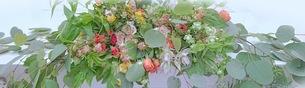 花の写真素材 [FYI01211930]