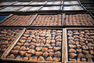 伊勢志摩大王崎の風景(干物)の写真素材 [FYI01212321]