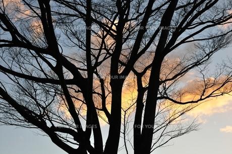 朝焼けの雲を背にしての写真素材 [FYI01212366]