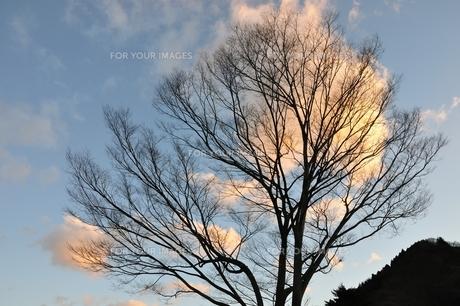 朝焼けの雲を背にしての写真素材 [FYI01212367]