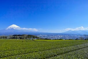 富士山と茶畑の写真素材 [FYI01212494]