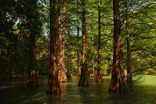 九大の森の写真素材 [FYI01212495]