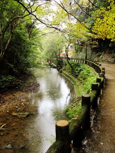 遊歩道沿いを流れる小川 の写真素材 [FYI01212559]