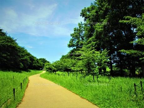 水色の空と緑の森の写真素材 [FYI01212589]